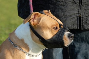 Medical Journal Top  Aggressive Dog Breed