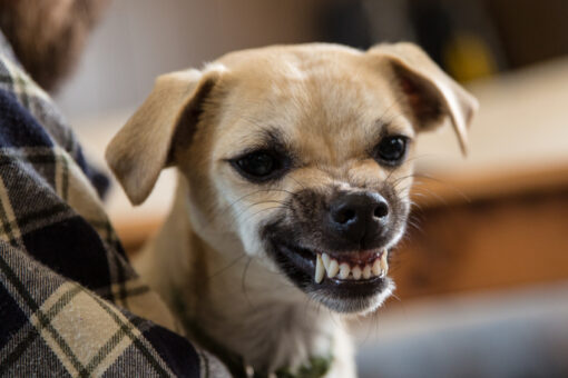 Can a Person Suffer Serious Injuries from a Dog Bite Accident if the Dog Was Small?